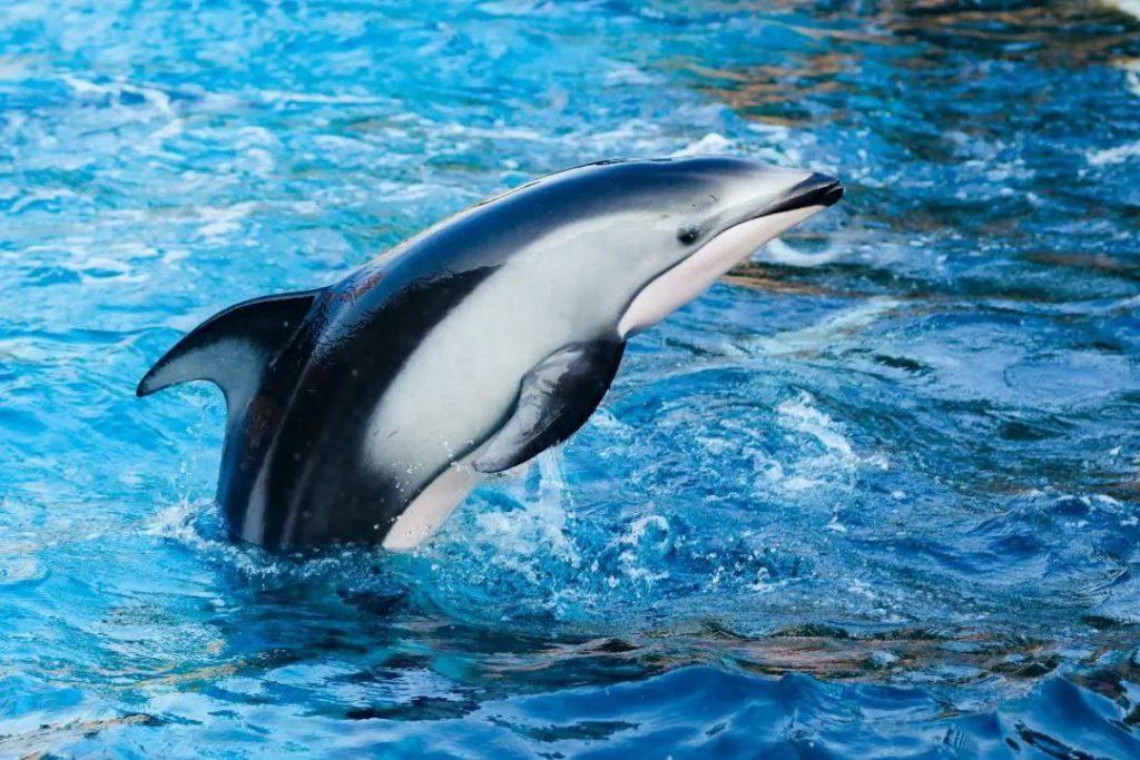 珠海长隆海洋王国的动物们都吃啥呢?涨知识了~