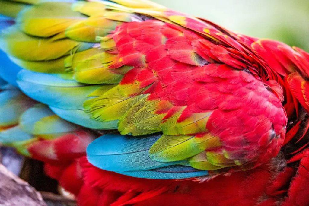 长隆萌物直拍特辑| 动物身上的五彩斑斓,美翻了!